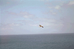 marriage.png